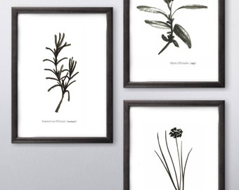 Set of 3 Culinary Herbs Rosemary Chive Sage Minimal Black and White Kitchen Print Wall Art Ink Simple Sketch Illustration Free shipping