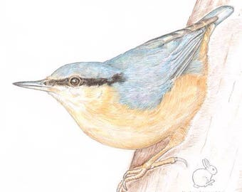 Nuthatch - Blank Card