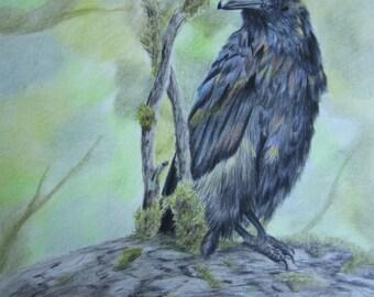 Raven Colors