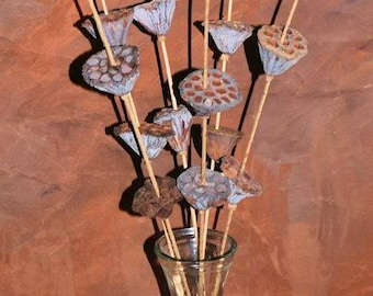 Multiple Lotus Pods on Stem | Dried Lotus Pods | Dried Decor | Dried Pods