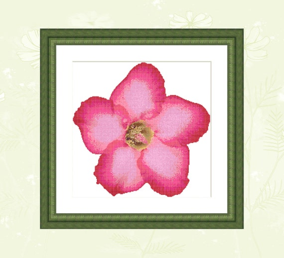 desert flower pdf free download
