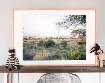 Colour photography print. Zebras and Elephants at Sunset. Large print, Wildlife photography