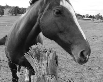 Horse | Digital Download