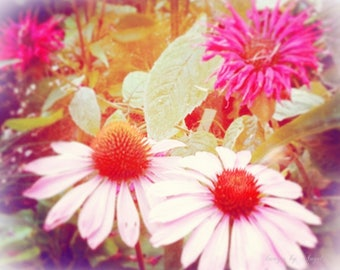 Dreamy Flowers Fine Art Photography Digital Download - Download Images - Photo Stock Images - Soft and Dreamy Flower Photography - Echinacea