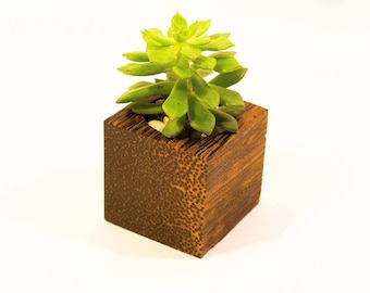 Black Palm Succulent Planter - Simple Is Better Collection
