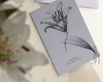 Map Lily-Lily card-flower-flower-Black and White-botanical Illustration-botanical illustration-Elegant-Stipling-Classic