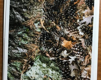 Pine Cones in the Fall
