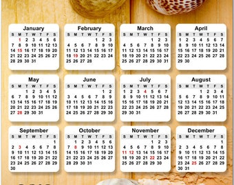 """Colorful Sea Shells 2018 Full Year View 8"""" Calendar - Magnet or Wall #3860"""