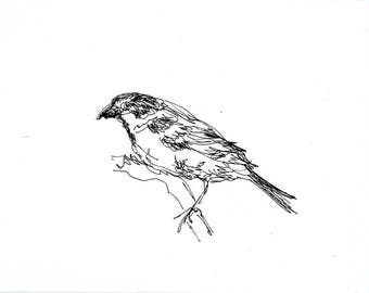 Sketchbook Sale - Bird #2 Original Ink Line Drawing - 8x10 Songbird Original Art