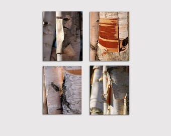 Collection of Four Birch Tree Bark Close Up Photos Print Archival Canvas Wall Art