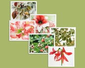 Six Seasonal Holiday Note Cards pack, winter floral photography Christmas card assortment, boxed stationery set of 6