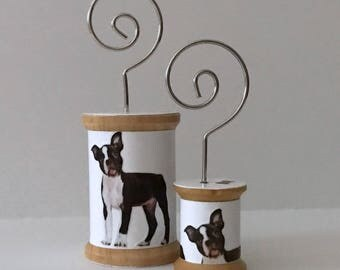 Boston Terrier - Cool Spools
