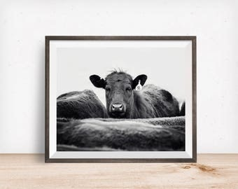 Cattle Photograph in Black and White, Ranch Animal Photography, Physical Farm Print