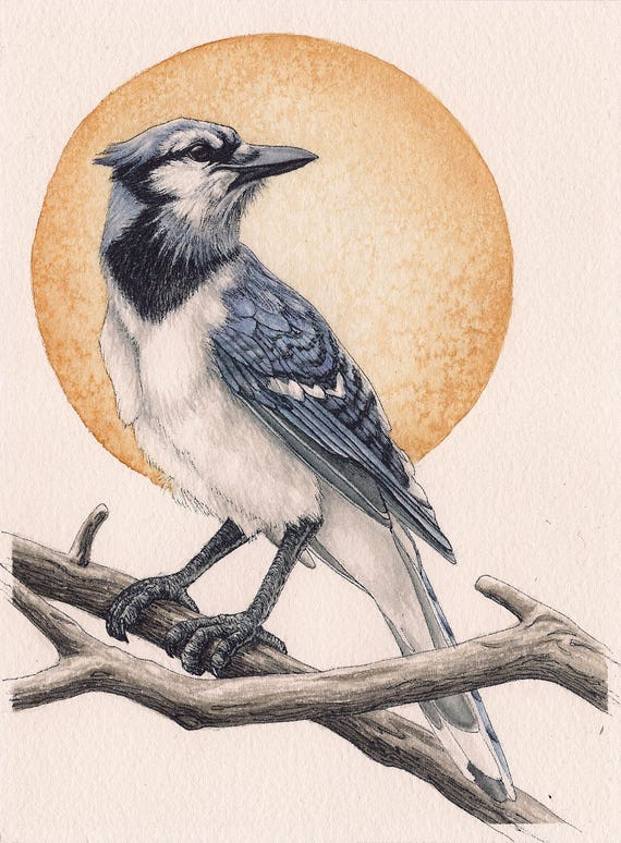 "Blue Jay Bird - Print of Original Art 5"" x 7"" watercolor and ink Giclee archival"