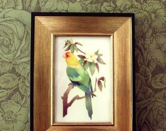 Extinct Parrot Art Print - Carolina Parakeet