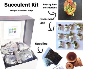 Succulent Kit (Miniature Succulent Design)