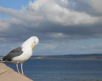 Seagull, Monterey, Ocean, Aquarium, Bay, Sky, Seascape