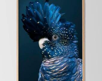 Black Cockatoo Print, Bird Wall Art, Blue Decor, Large Printable Poster, Contemporary Australian Bird Print