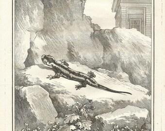 Salamander, Beautiful antique Engraving 1788, natural history, Original Prints, handmade paper