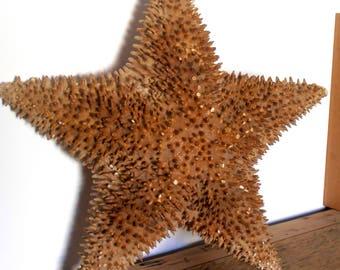 genuine starfish