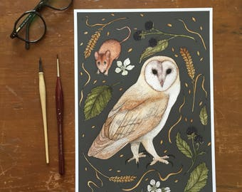 Barn Owl A4 Giclee Print