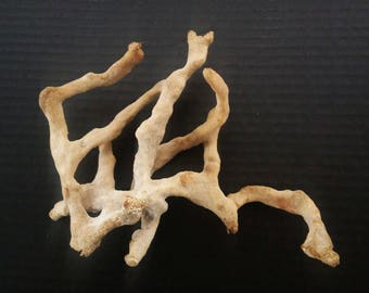 Natural Sea Sponges - Nautical Specimens - Fossils - Ocean Decor - Beach Home Decor - Science Specimens - Vintage Sponge - Natural Decor