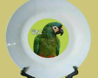 "Illigers Macaw Parrot White Decorative Ceramic 8"" Plate and Display Stand"