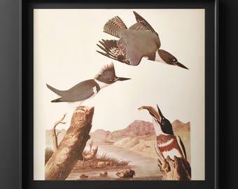 Audobon bird print/ kingfisher/ blue bird print