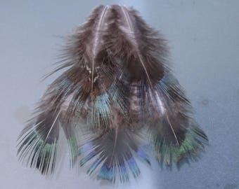Set of 5 dark pheasant feathers
