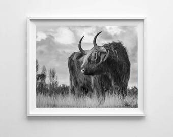 Highland cattle Print, Printable Art, Bull picture, Cow poster print, Printable photography, Nature picture, Black and white photo