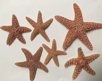 6 Sugar starfish assorted sizes 2-4 inches crafts, wedding, beach theme