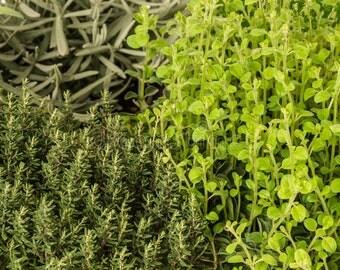 Windowsill Fragrance Garden Kit