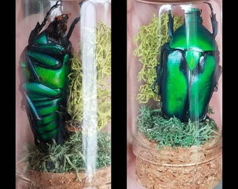 Emerald scarab beetle miniature curio display