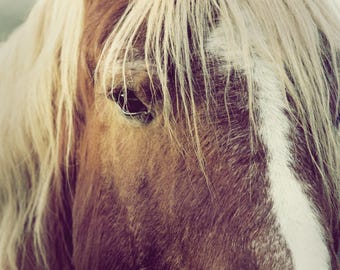 Horse - Stock Photography, Digital Download, Photograph, Nature