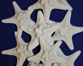 "12% OFF 90 small ARMORED starfish, 1-2-1/2"", preserved, dried,craft supplies,jewelry supplies,starfish,beach decor,nautical,wedding,supplies"