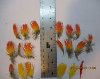 19 Blue and Gold Macaw Body Feathers