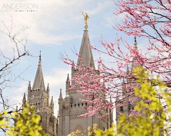 Salt Lake Temple at Springtime 8x10 Mounted Print