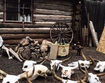 Custom Cow Skull