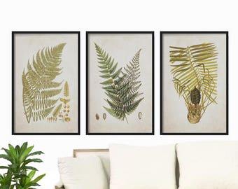 Vintage Ferns Print  - Farmhouse Print - Botanical Print Set - Botanical Prints - Rustic Decor - Wall Art - Fern Prints Vintage background