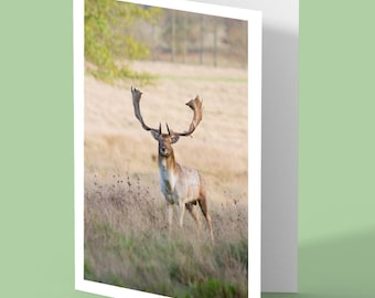deer greeting card - deer card - stag deer - fallow stag - blank card - greetings card - nature card - UK wildlife - card for animal lovers