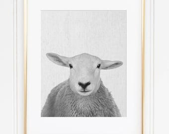 Sheep Painting, Farm Sheep Art, Sheep Head Wall Art, Farm Animal Nursery Decor, Black and White Animal Print, Printable Sheep Art
