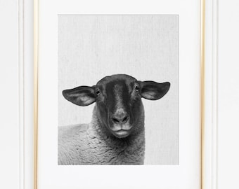 Suffolk Sheep Print, Sheep Art, Black Head Sheep, Scandinavian Modern, Farm Animal Instant Download, Printable Suffolk Sheep