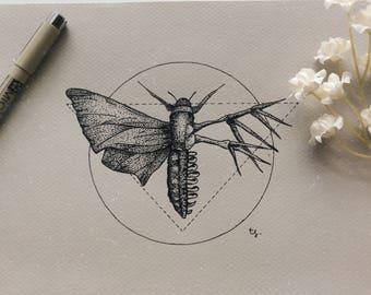 Moth Anatomy