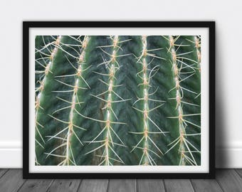 Cactus: Plant Photography, Succulent, Printable JPG, Poster, Instant Download