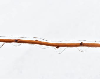 Photography ice ice on branch in winter snow
