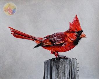 """Cardinal, Cardinal Painting, Northern Cardinal, Cardinal Artwork, 8""""x10"""", acrylic on watercolor paper, original hand painted artwork"""