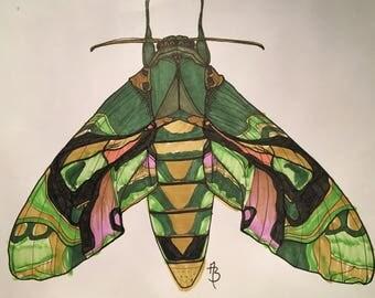 Oleander Moth Print