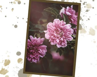 Pink flowers / Photograph / Poster / To print / digital download : JPG