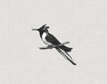 Bird Illustration, Digital Download Printable, Image For Wall Decoration, Prints