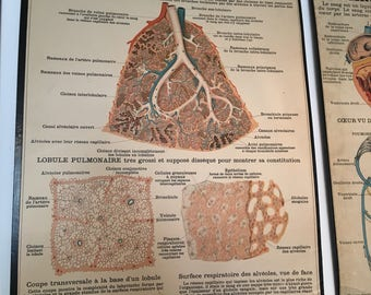 Antique French anatomical chart